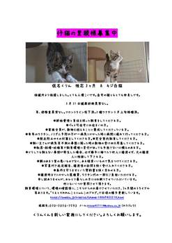仔猫の里親様募集中(アイス&クリン)_ページ_1.jpg