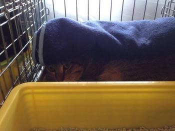 cats9.jpg